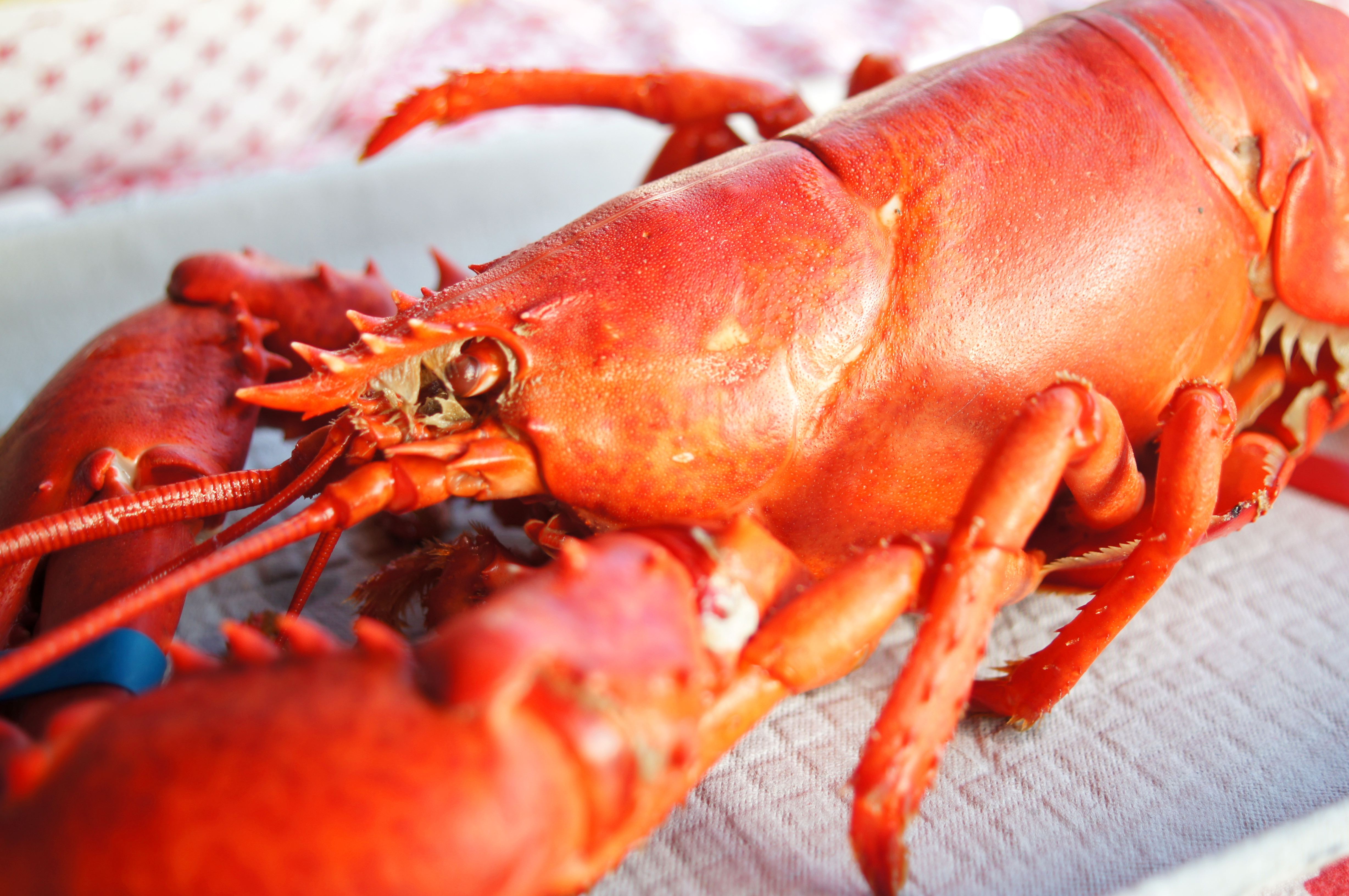 boiled lobster Archives - FLAVORFUL JOURNEYS