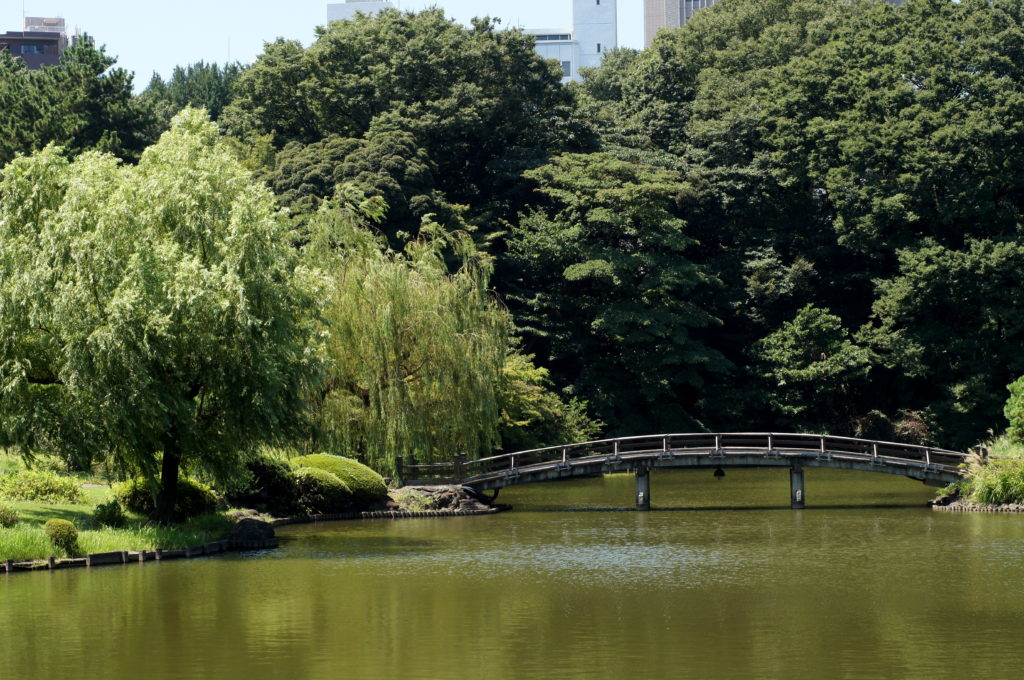 Willow Tree and Arch Bridge in Shinjuku Gyoen National Garden